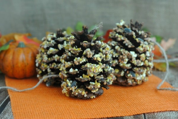 Easy Fall Crafts Using Pine Cones: Homemade Pine Cone Bird Feeders 3