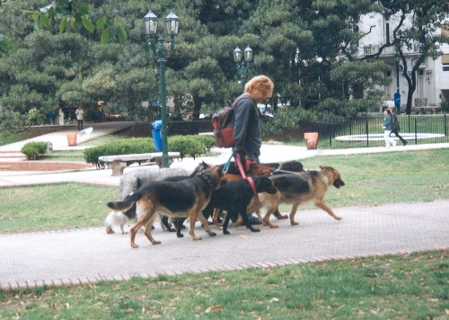lady walking dogs to promote ways to earn cash