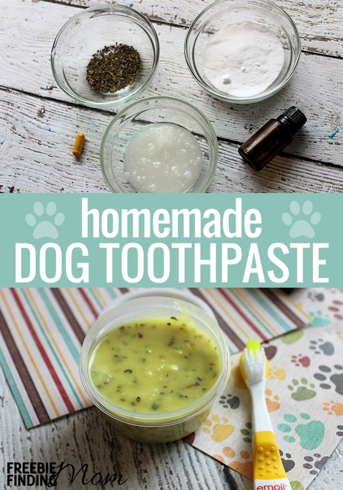 How often do you brush your dog's teeth? Just like humans our furry family member's need their teeth brushed too. This homemade toothpaste is the best dog toothpaste because not only is it easy and inexpensive to make, but it is effective at cleaning your dog's teeth and freshening his breath too. Take a few minutes and grab these five ingredients to make this homemade dog toothpaste today. #homemadetoothpaste #diytoothpaste #dogtoothpaste #dogstuff #pets #coconutoil