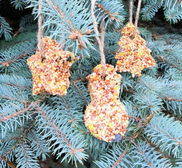 This cookie cutter bird feeder recipe is a frugal way to decorate your home or yard or make DIY gifts