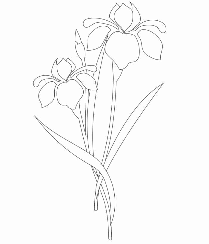 This simple free iris flower coloring page doesn't have a lot of details making it a great spring flowers coloring page for kids!