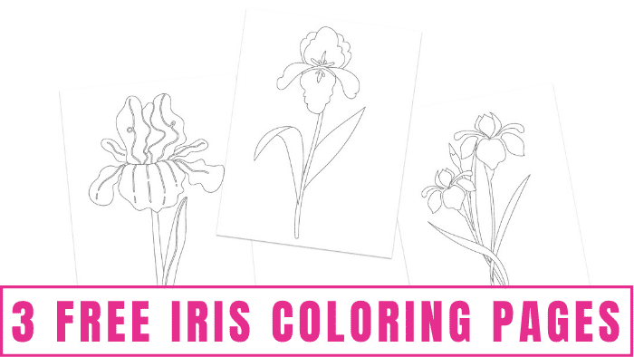These free iris coloring pages will have you feeling like there's beautiful spring weather any time of the year.