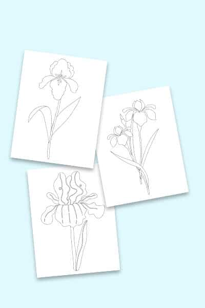 free iris coloring pages