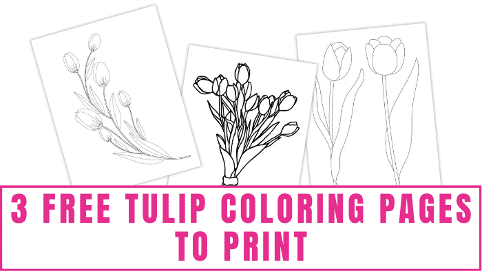 These free tulip coloring pages to print are the perfect way to enjoy spring blooms all year long.