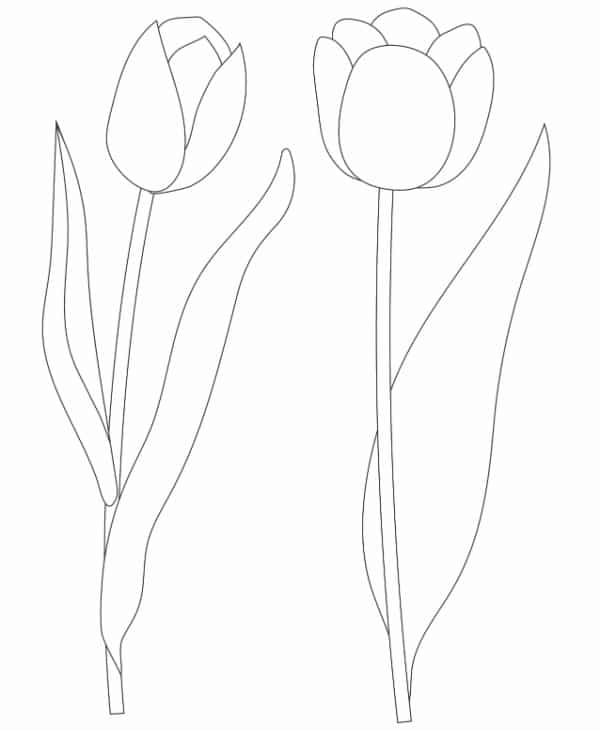 This free printable coloring page for tulips features one tulip flower on the cusp of blooming and another one that has bloomed.