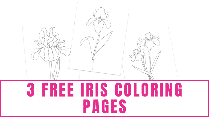 These free iris coloring pages are great for adults and kids of all ages. Some of the designs have more intricate details which are suitable for adults and older kids while other designs are simpler which make them ideal for young kids.