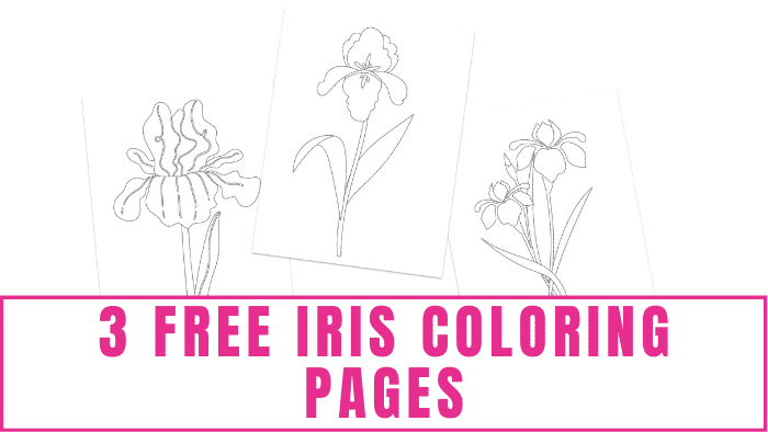 The details on these free iris coloring pages for adults are also suitable for older kids to enjoy.