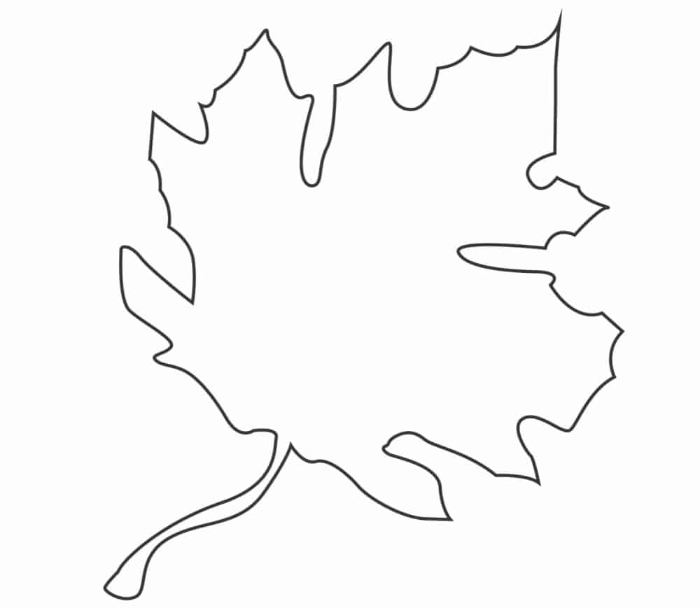 While your kid colors or decorates this free fall leaf template printable you can educate them on why leaves change color.